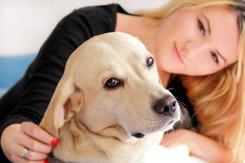 Calm dog - vitalplanet.com