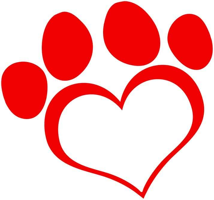 canine-heart-disease-overlooked