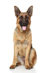 dog with joint issues - vitalplanet.com