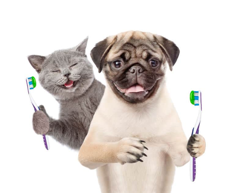 Dental Care for Your Dog and Cat - vitalplanet.com