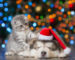 holiday safety for pets - vitalplanet.com