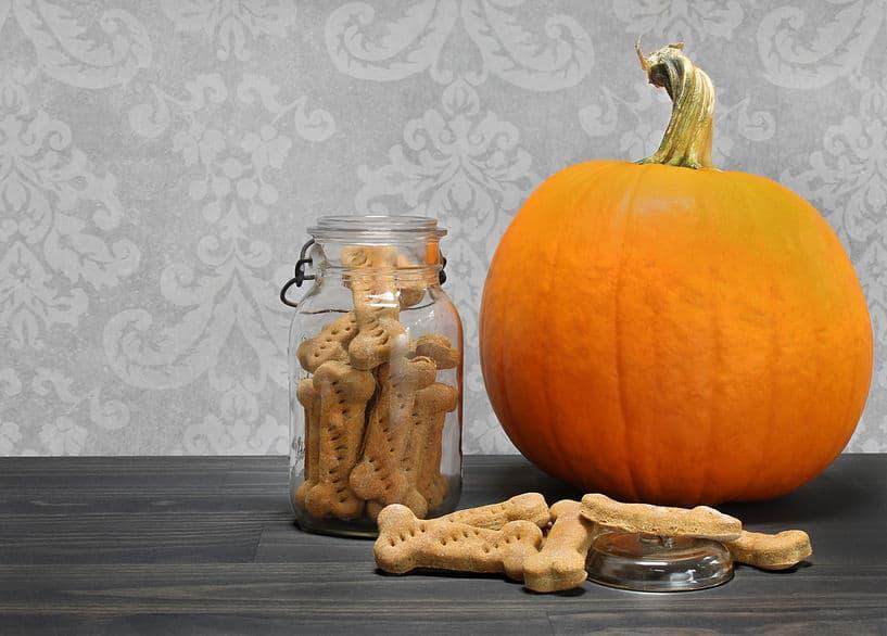 Pumpkin dog treats - vitalplanet.com