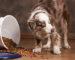 Diabetes in pets - dog - vitalplanet.com