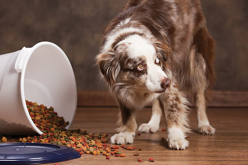 Diabetes in pets - dog - vitalplanet.com