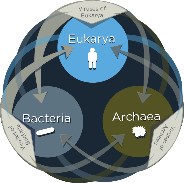 SIBO organisms