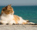 cat purring benefits health