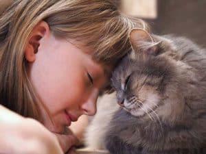 Diabetes in Pets - Cat Love - vitalplanet.com