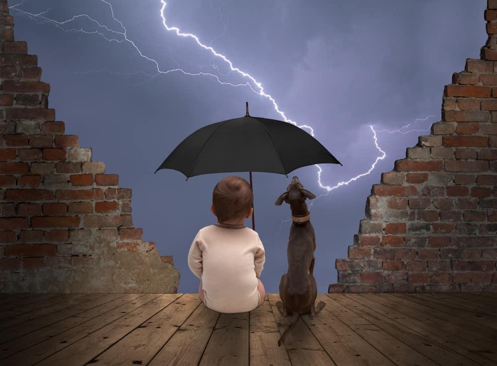 dog afraid of thunderstorms