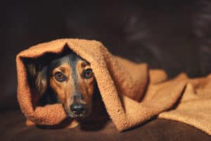 Halloween pet safety tips - hiding in anxiety.
