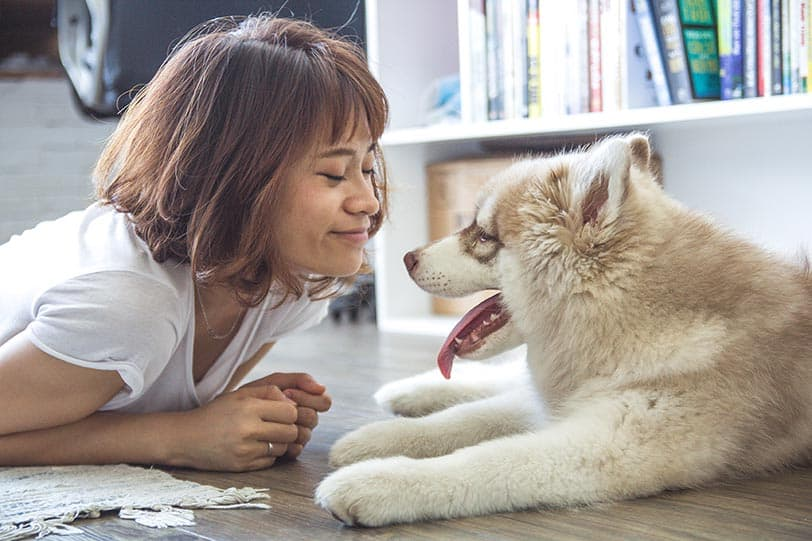 oxytocin-happy hormone for humans and dogs