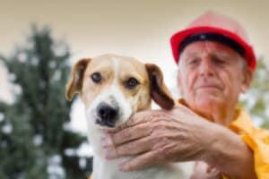 pet-emergency-plan-tips